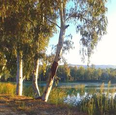 Sulle rive del lago (leporsoia) Tags: alberi lago amazing cielo lungolago rive specchiodacqua