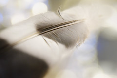 When doves cry (Wim van Bezouw) Tags: abstract dof bokeh object feather dcr250 raynox selectiveconceptualdof