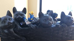 05012016-03 (machu picchu) Tags: cats lamp lego tess dlused birthweek