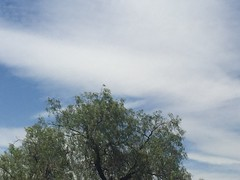 #cielo #comosimehablara #domingo #azulyblanco #algodon #espuma (lizzam0902) Tags: cielo domingo espuma algodon azulyblanco comosimehablara