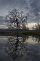 oak reflection (dovlindphoto) Tags: sunset sky lake reflection tree water clouds landscape spring oak sundown pentax sweden k5 ml dovlind dovlindphoto