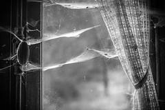 Cobwebs (Channed) Tags: urban bw abandoned window belgium decay exploring curtain belgi cobweb urbanexploration exploration cobwebs urbanexploring urbex verlaten vervallen chantalnederstigt urbexlocatie