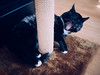 Between the scratching post and the warmer (lar-f) Tags: pet animal cat floor yawn indoor whiskers sleepy kitteh meow yawning scratchingpost