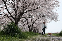 Fujifilm X70 : April 9, 2016 (takuhitofujita) Tags: flickr 木 自然 風景 アウトドア eyefi eyeficloud fujifilmx70