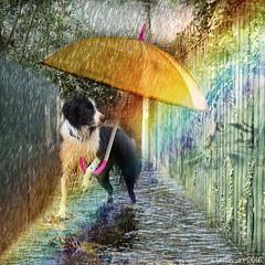 Scary Graffiti (Lemon~art) Tags: dog pet texture wet rain composite umbrella cat fence fun happy graffiti rainbow alley layers passage raining puddles challenge mixmaster