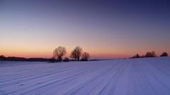 memories of the winter (JoannaRB2009) Tags: blue trees winter sunset sky snow nature landscape view silhouettes poland polska fields lodzkie buczek dzkie parkkrajobrazowywzniesiedzkich lodzhillslandscapepark