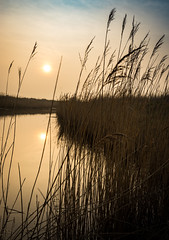 Sunset on the marshes (garybroughton05) Tags: uk blue sunset england sky orange color water silhouette clouds reflections reeds landscape countryside suffolk spring colorful calm serene marsh colourful southwold eastanglia reydon canon1740 sonya7