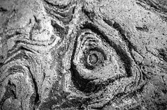 Rosetta (Walimai.photo) Tags: bw white black macro byn blanco beach branco stone lumix sand noir negro playa preto panasonic arena blanc piedra lx5