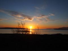 Sunset and tree (lafur Ingi) Tags: blue sunset sea sky cloud sun tree yellow heaven