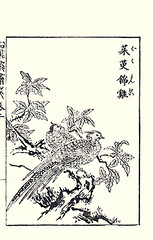 Elaeagnus and golden pheasant (Japanese Flower and Bird Art) Tags: flower bird art japan japanese book golden pheasant picture kano toun woodblock nishimura elaeagnus phasianidae pictus elaeagnaceae chrysolophus shigenaga readercollection