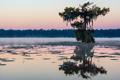 Lake Martin Dawn ll (fate atc) Tags: trees usa lake sunrise dawn louisiana atchafalayabasin delta swamp wetlands cypress lakemartin