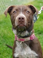 Minnie_02 (AbbyB.) Tags: rescue dog pet newjersey canine shelter adopt shelterpet petphotography easthanovernj mtpleasantanimalshelter