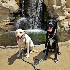 Cassie and Shiloh and a waterfall. (Jake McGee) Tags: california dogs waterfall husky labrador hiking adventure
