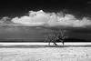 1604 Salton Sea HR175 (nooccar) Tags: california blackandwhite monochrome blackwhite southerncalifornia saltonsea 1604 ruralexploration nooccar dontstealart devonchristopheradams devoncadams photobydevonchristopheradams april2016 contactmeforusage