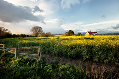 Broken Fence (aveyardphotography) Tags: blue trees sunset sky sunlight house color colour broken nature yellow clouds rural fence evening skies farm yorkshire farming north farmland colourful canola rapeseed oilseed rapa rapaseed stillington rappi