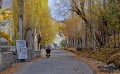 Road to Nagar! (Shehzaad Maroof Khan) Tags: road travel autumn trees pakistan bike countryside nikon village karakoram hunza ontheroad countryroad nagar gilgitbaltistan