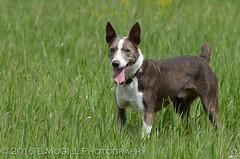 DSC_2743 (erinmcgillphotography) Tags: dog emily hayek