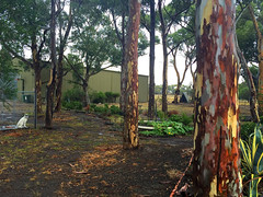 Outback backyard (Seb Ian) Tags: trees tree nature garden bush country australia victoria outback gumtree eucalyptustree diggersrest