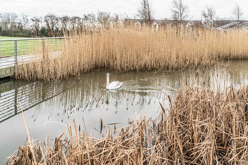 Wind Powered Public Park In Clongriffin Dublin [Father Collins Park]-110950