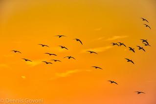 Sunset Arrivals