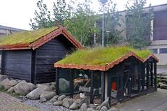 turf-roofed chicken coop (Anosmia) Tags: chicken iceland nes peninsula hafnarfjörður ísland reykjanes chickencoop skagi turfroof icelandicchickens kjúklingur íslenskahænan haughænsni landnámshænan