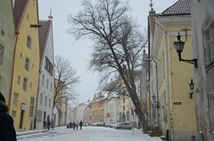 Lumesadu Laial tnaval (anuwintschalek) Tags: street schnee winter snow tallinn estonia strasse january lantern lai snowfall lumi laterne altstadt oldtown latern eesti estland talv vanalinn 2016 schneefall tnav laitnav d7k lumesadu nikond7000 18140vr
