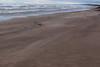 Blowing Sand,Sands of St Cyrus,St Cyrus National Nature Reserve_jan 16_683 (Alan Longmuir.) Tags: aberdeenshire grampian blowingsand stcyrus shiftingsands sandsofstcyrus stcyrusnationalnaturereserve