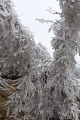 _MG_1066 (schamrock77) Tags: winter italy mountain ice freezing natura inverno montagna friuli ghiaccio galaverna canon6d 35f2is