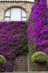 Wonderful Bougainvillea (AnnaPirata) Tags: flowers flower pals catalonia bougainvillea catalunya costabrava purpleflowers