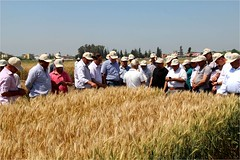 Wheat_FD_Turkey3 (ICARDA-Science for Better Livelihoods in Dry Areas) Tags: turkey farmers northafrica climatechange mena pulses ifad nutrition resilience drylands icarda incomes westasia croprotation seedsystems conservationagriculture euifad wheatlegumecroppingsystems