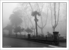 Niebla en Baeza (Lourdes S.C.) Tags: bw espaa byn andaluca rboles paseo niebla baeza provinciadejan