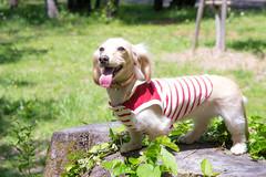 IMG_1253 (yukichinoko) Tags: dog dachshund 犬 kinako ダックスフント ダックスフンド きなこ