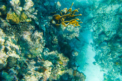 Snorkeling, Montego Bay, Jamaica (ncs1984) Tags: travel canon island bay ngc jamaica tropical caribbean montegobay montego 6d caribbeansea canonef1635mmf28 canonef1635f28 canon6d