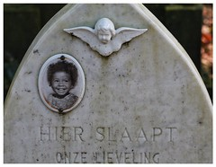 s'Hertogenbosch Begraafplaats Orthen (zsirra) Tags: friedhof cemetery graveyard angel den bosch begraafplaats cimitero grabsteine cmentarz grber orthen