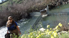 Fish Counting Weir