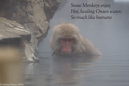 "Snow Monkey Hotspring - Haiku.jpg • <a style=""font-size:0.8em;"" href=""http://www.flickr.com/photos/55493827@N04/25141997281/"" target=""_blank"">View on Flickr</a>"