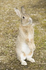rabbit #4 (Y.Hassy) Tags: rabbit animal canon 5d