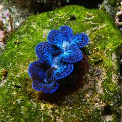 Colors of the caribbean (daniel EGV) Tags: blue green colors aquarium couleurs caribbean larochelle carnivore caraibes