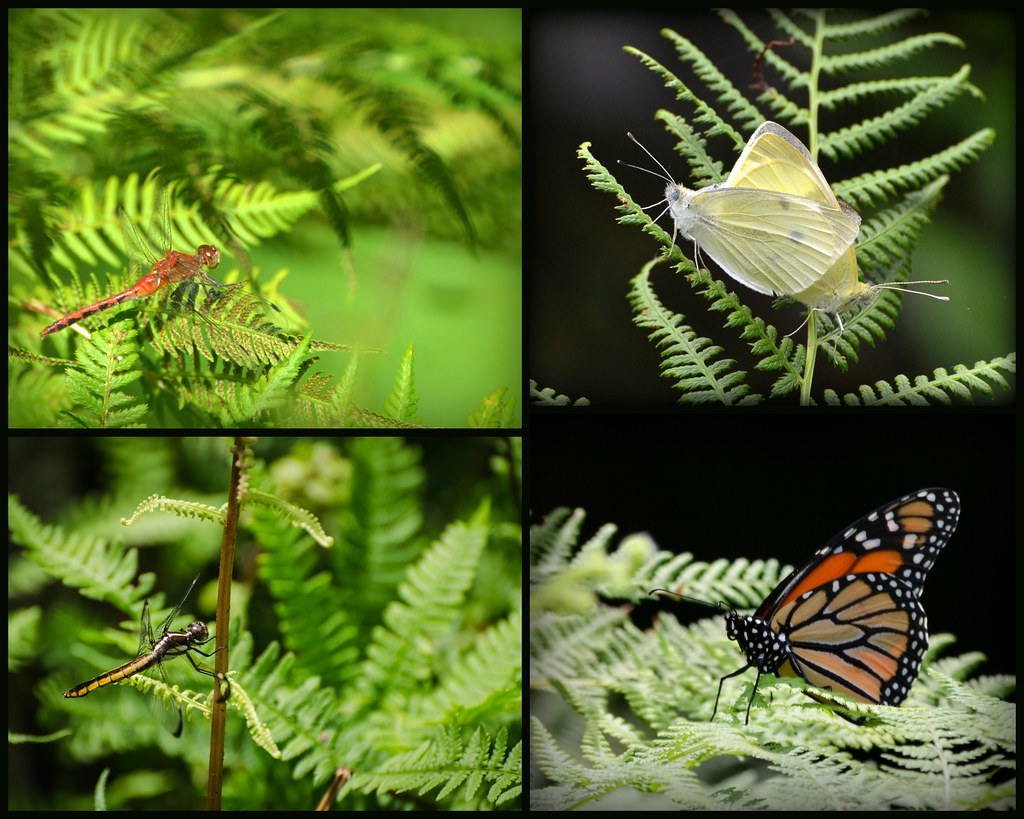 the world u0027s best photos of ferns and habitat flickr hive mind