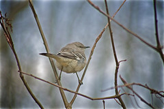 bird butt (avflinsch) Tags: 500px ifttt