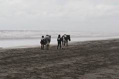 IMG_EOS 7D Mark II201604031794 (David F-I) Tags: horse equestrian horseback horseriding trailriding trailride ctr tehapua watrc wellingtonareatrailridingclub competitivetrailriding sporthorse equestriansport competitivetrailride april2016 tehapua2016 tehapuaapril2016 watrctehapuaapril2016
