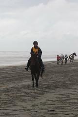 IMG_EOS 7D Mark II201604031825 (David F-I) Tags: horse equestrian horseback horseriding trailriding trailride ctr tehapua watrc wellingtonareatrailridingclub competitivetrailriding sporthorse equestriansport competitivetrailride april2016 tehapua2016 tehapuaapril2016 watrctehapuaapril2016