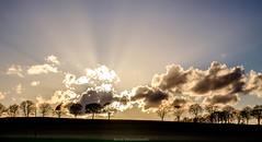 April evening (bernd obervossbeck) Tags: trees light sky tree nature silhouette treesilhouette evening licht natur himmel eveningsky bume sunbeam sonnenstrahlen abendhimmel eveninglight raysoflight rayoflight sauerland abendstimmung abendlicht hochsauerland baumreihe rowoftrees baumsilhouette berndobervossbeck fujixt1