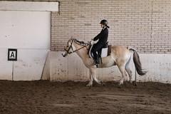IMG_6450 (Marc van der Molen) Tags: manege paarden noordwijkerhout 2016 dressuur langeveld