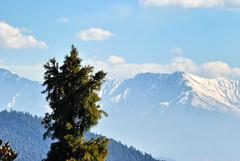 The Green and White in the Mountains (_Amritash_) Tags: travel india mountains tree trek landscape log greens himachal himalayas snowcappedmountains snowcappedpeaks dhauladhar dhauladharrange himalayanlandscape mountainsnap incrediblehimachal travelinindianhimalayas exploringinfinity