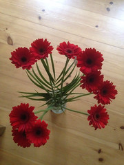 66/365 Happy red flowers - Gerbera