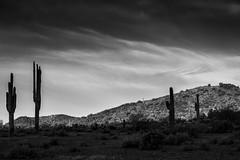 Desert Sunrise Clouds & Saguaro (Paul T. Marsh/PositivePaul) Tags: vacation arizona phoenix monochrome clouds sunrise blackwhite spring canon5d saguaro 2016 llens canon70200mmf4l canonllens wwwpaulmphotographycom paulmarshphotography niksilverefexpro lightroom5 paultmarsh
