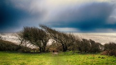 """Don't need a weatherman... (OutdoorMonkey) Tags: ocean trees sea cloud storm nature field rain weather squall rural outside coast countryside seaside outdoor coastal dorset charmouth"