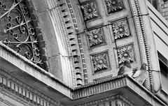 Architecture Textures (sea turtle) Tags: seattle city urban blackandwhite bw detail bird birds stone wall concrete grate blackwhite downtown market pigeon pigeons details wroughtiron screen ledge pikeplacemarket