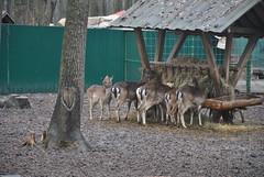 DSC_0021 (Rinswid) Tags: park nature animal spring kharkov feldman ecopark